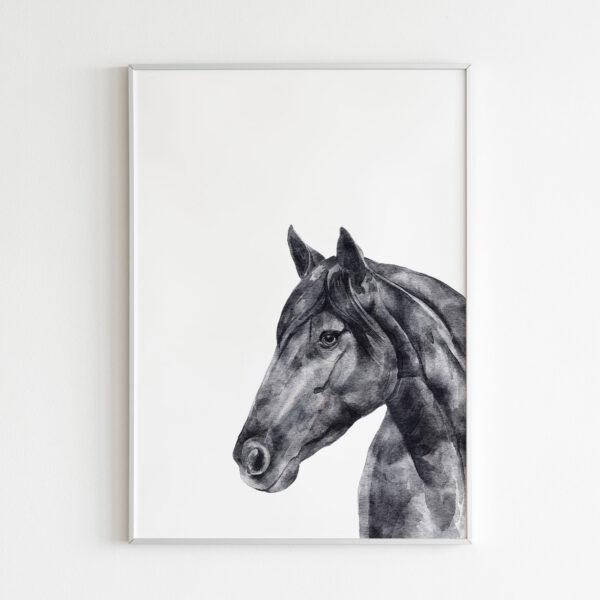 cavallo animali bianco nero stampa