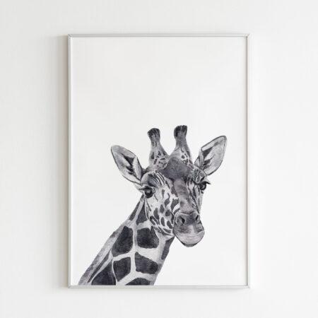 Animali in bianco e nero – Stampa